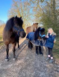 Hästar på Ven